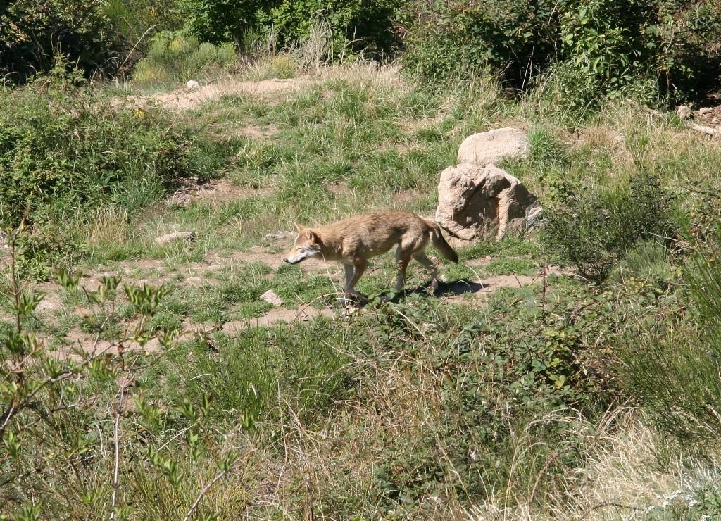 01 Les loups du Gervaudan 10