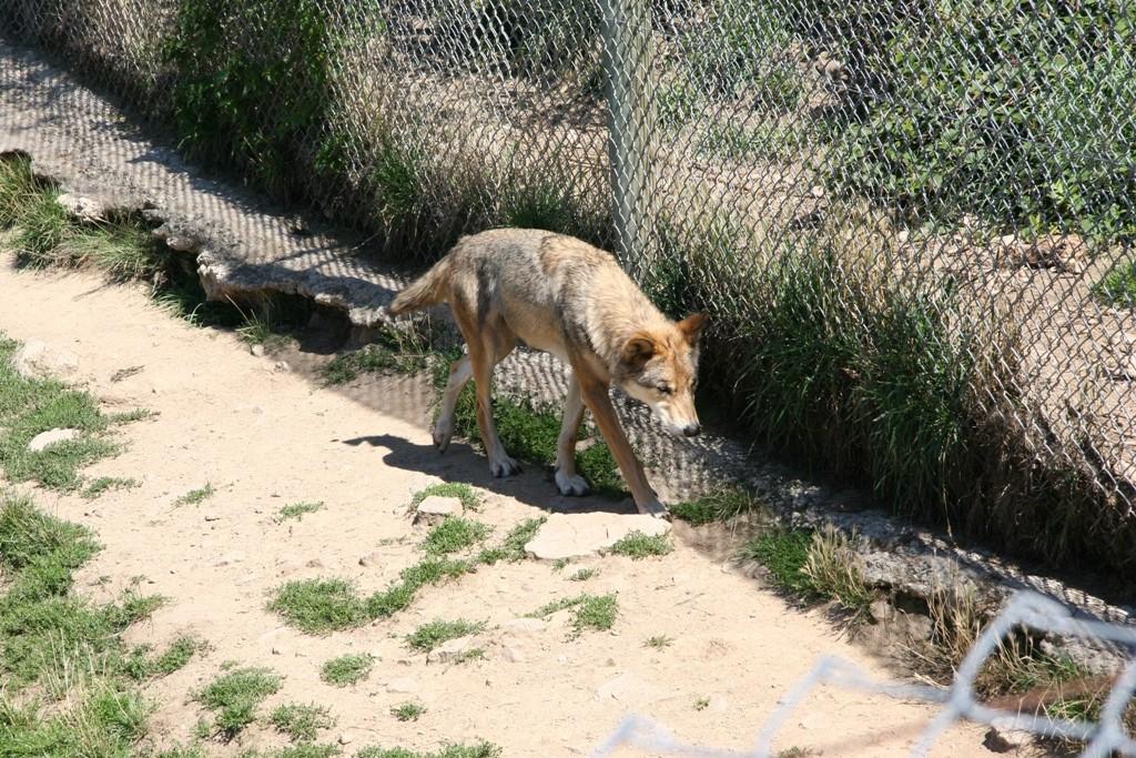 01 Les loups du Gervaudan 15