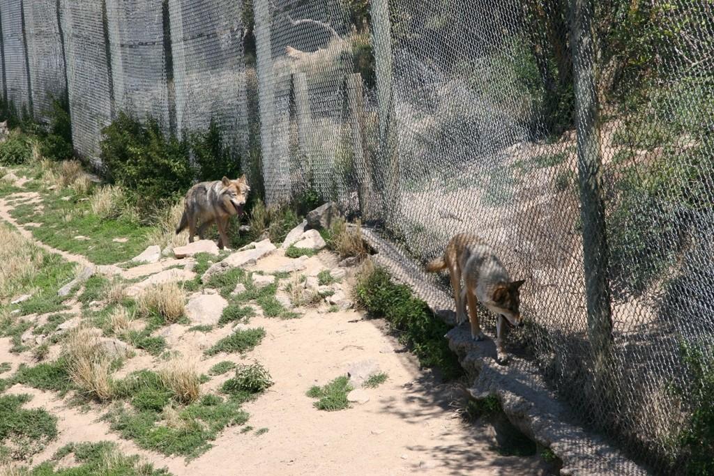 01 Les loups du Gervaudan 17