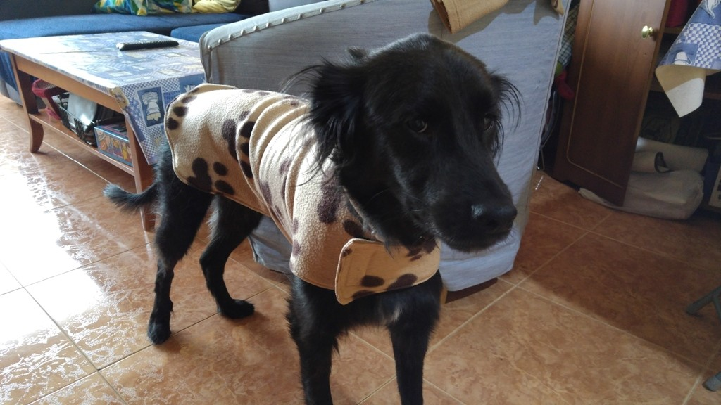 Abrigo trasgu veterinario 4